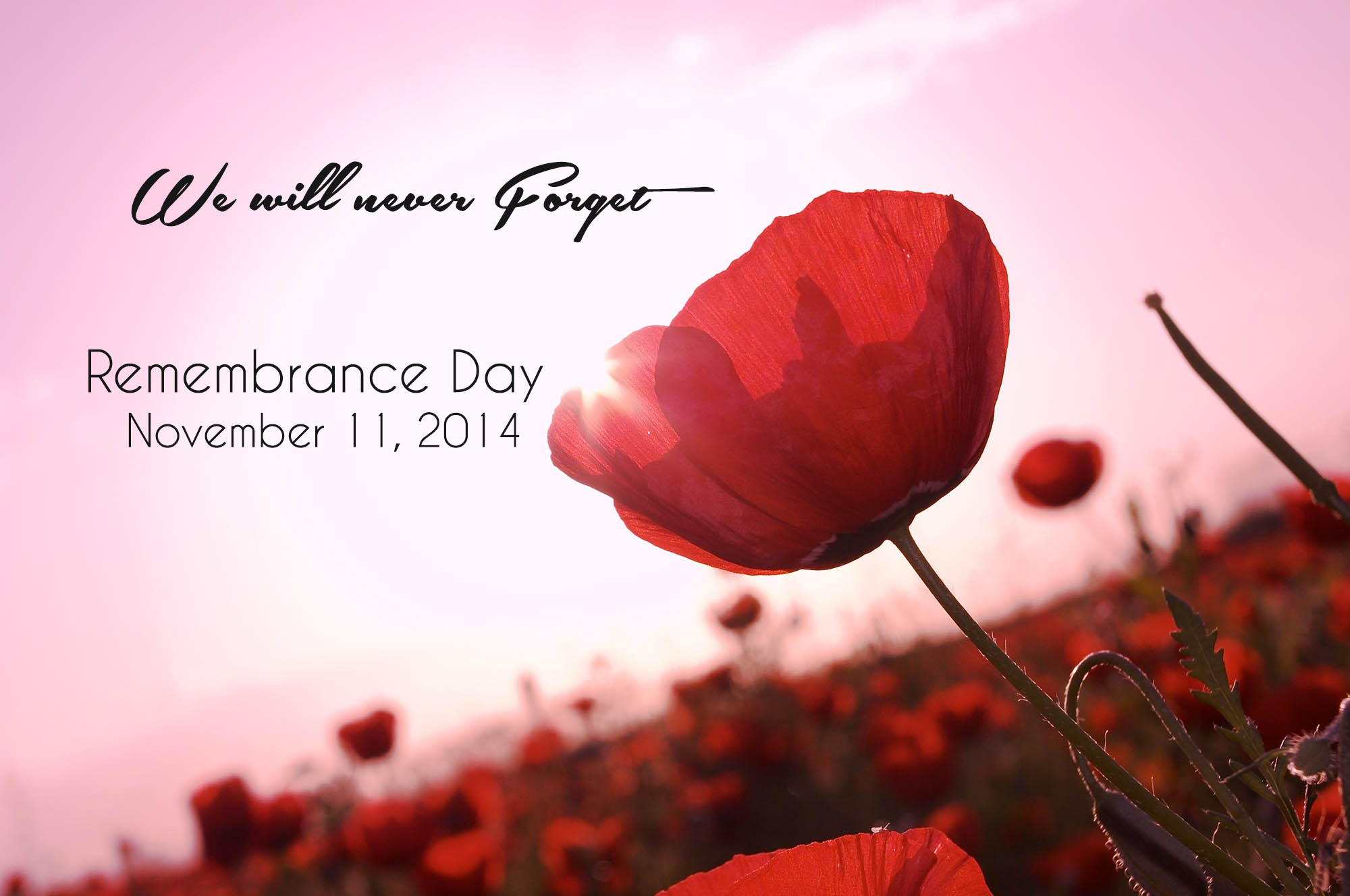 Why Wear a Poppy - Don Crawford - AllCore Communications