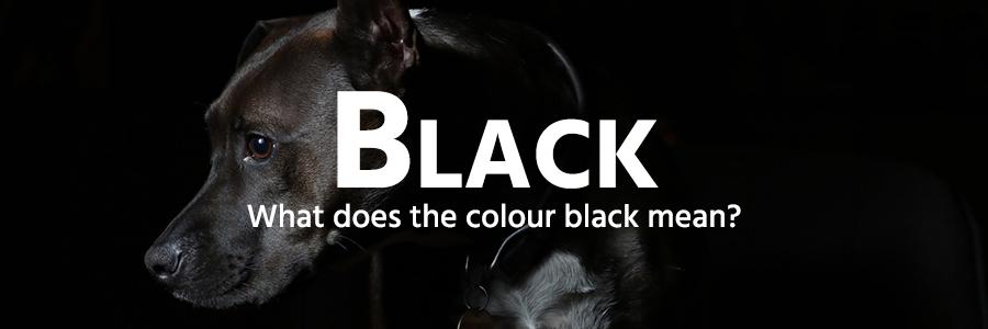 black colour example - Labrador dog