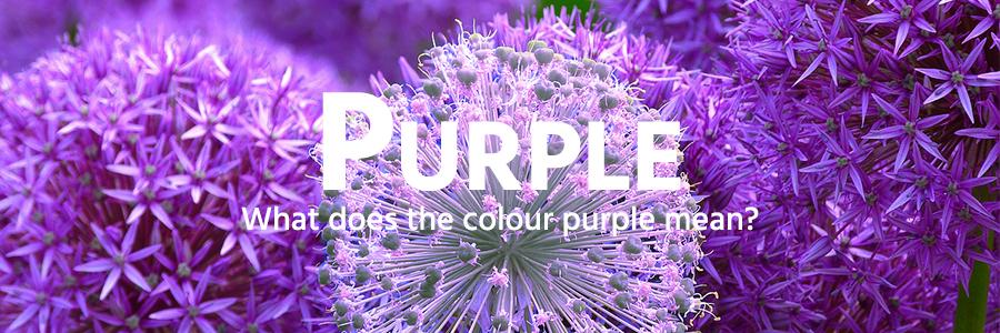 Purple colour example - flowers