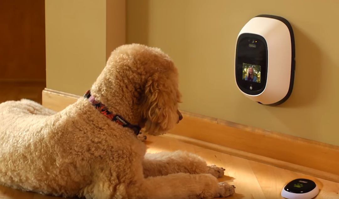 PetChatz dog camera
